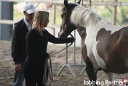 Motivation grâce à l'Equi-Jobbing, l'atout equicoaching de Jobbing Partner