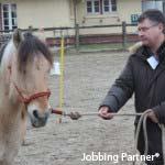 le concept Equi-Jobbing® : utilisation de l'effet miroir du cheval pour intégrer notre communauté d'Equi-manager®, manager bienveillant