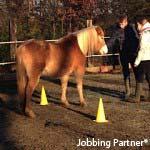 cheval-enfant-150x150opt