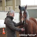 Coaching développement personel et équicoaching